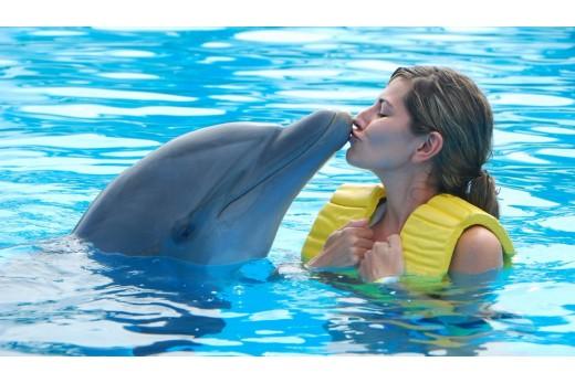 Плавание с дельфинами + фотосессия