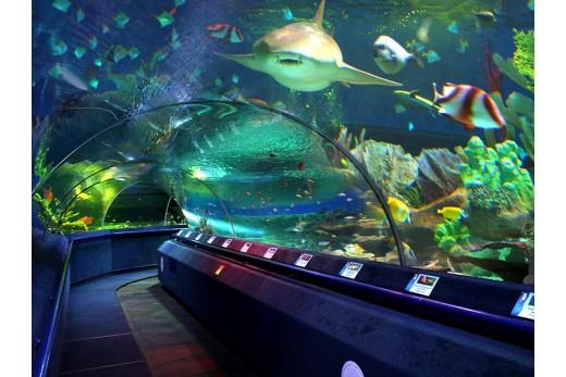 Посещение океанариума ТРК Нептун в Санкт-Петербурге