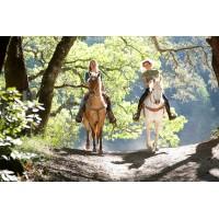 Прогулка на лошадях в Шуваловском парке Санкт-Петербурга